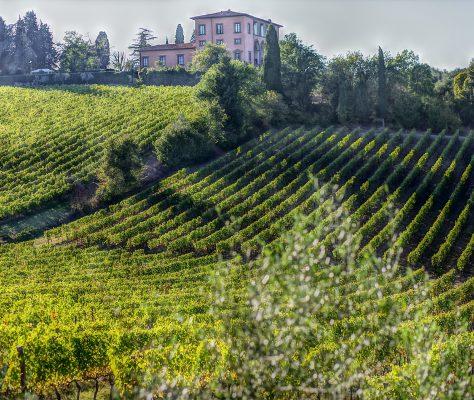 wine-3727820_1920